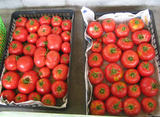 収穫できたトマト