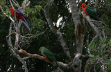 ラミントン国立公園での野鳥