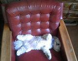 マルが椅子で熟睡