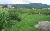 摂津にある野菜畑