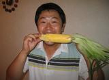 北海道大高酵素のトウモロコシ