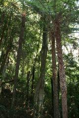 温帯雨林の遊歩道