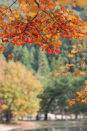 秋の庭園(白水阿弥陀堂)