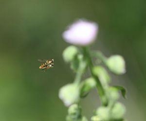 蜂の交尾?