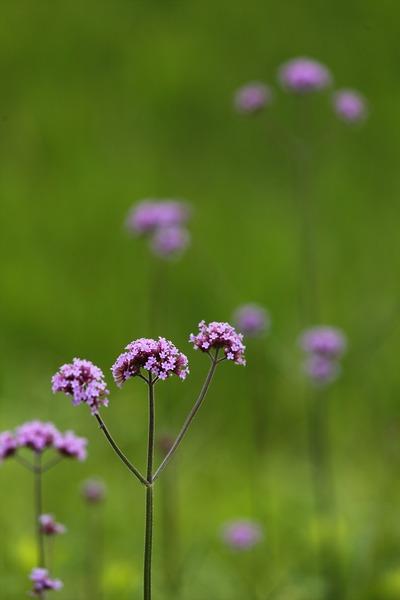 路肩の草花