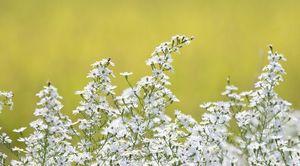 稲穂をバックに風にそよぐ花