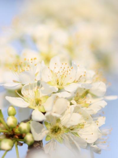 昔の写真に見る「春」1
