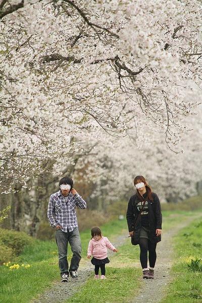 千本の桜の下を歩む、ゆっくりと