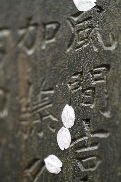 桜と日本人2