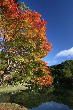 白水阿弥陀堂の紅葉