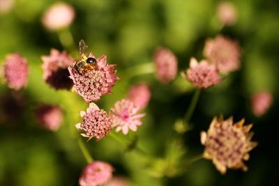 蜂の気持ちが解る(笑)