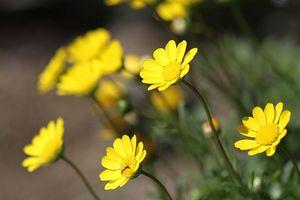 庭に咲いていた黄色い花