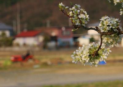 昔の写真に見る「春」2