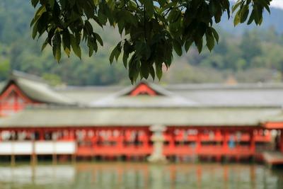 早朝の厳島神社9