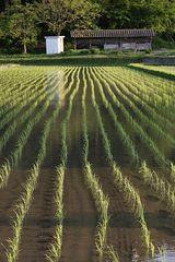 田園風景1