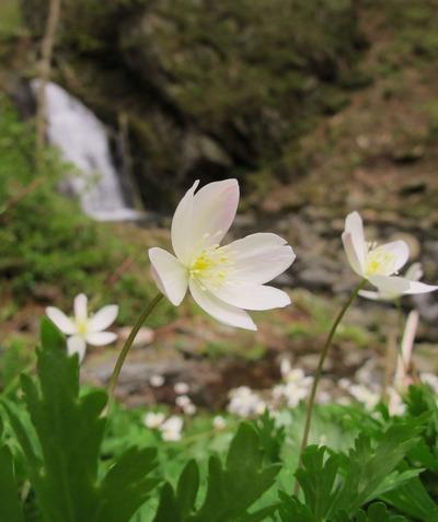 入遠野川の支流に有る「花滝」