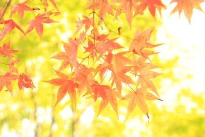 県立いわき公園内の紅葉1