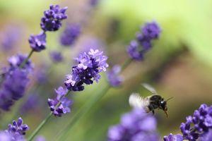 蜂はすばしっこい・・・