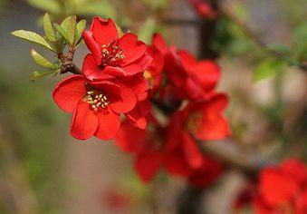 深紅の花びら