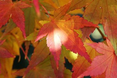 秋の終わり、我が家の庭