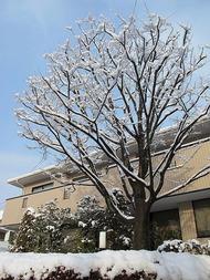 2月12日の降雪
