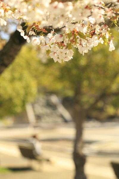 県立いわき公園3