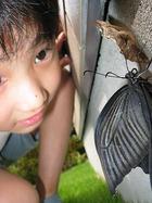 アゲハ蝶の羽化3