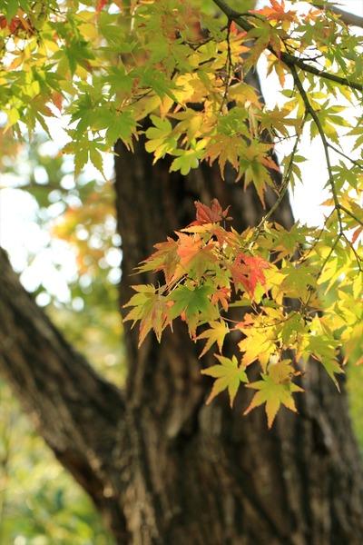 県立いわき公園内の紅葉4