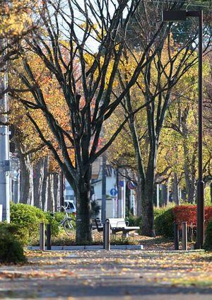 初冬の街路樹