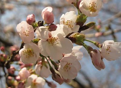 季節は春!