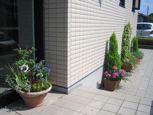 玄関先鉢植え1