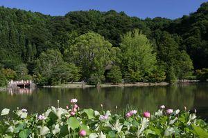 国宝・白水阿弥陀堂の庭園
