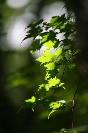 森林の木漏れ日