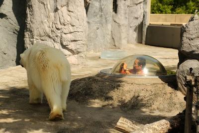 感心した旭山動物園2