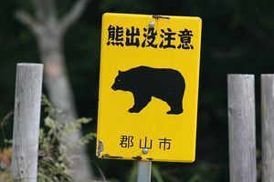 昨日、熊に襲われたニュースが・・・