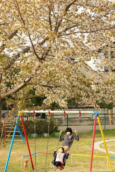 夏井川沿いの公園