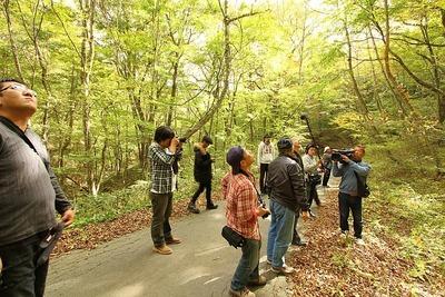 田人の原生林2