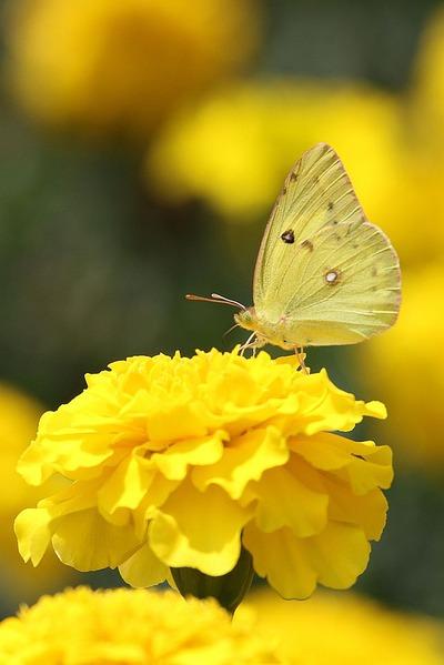 花と蝶(笑)