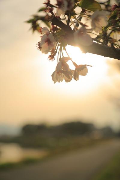 夕刻の夏井川1
