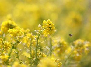 花とミツバチ1