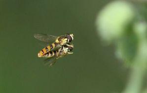 蜂の交尾?(拡大)