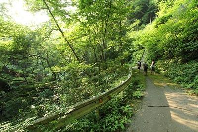 戸草川渓谷3