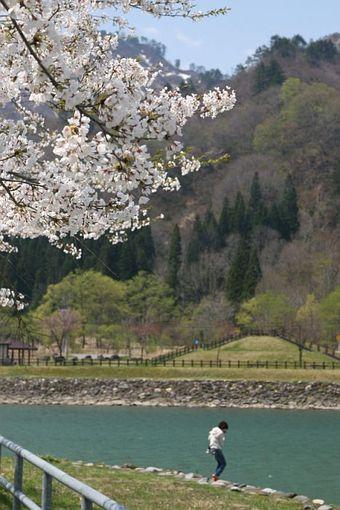 桜の公園の母子