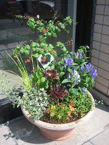 玄関先鉢植え2