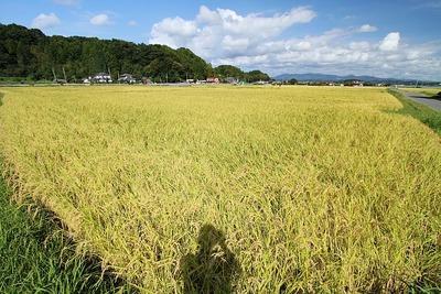 秋の田園風景