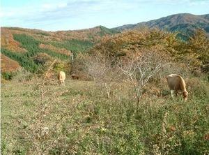 「ふくふく牧場」さんの風景