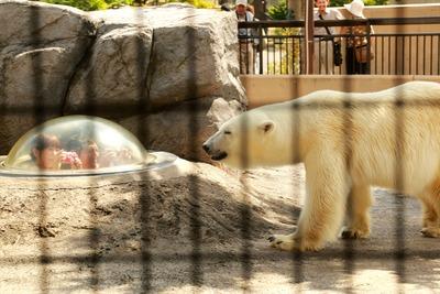 感心した旭山動物園1