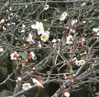 成田山勝行院の散策5