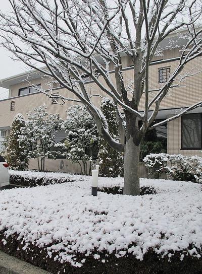 降雪に見舞われた酒井歯科医院1