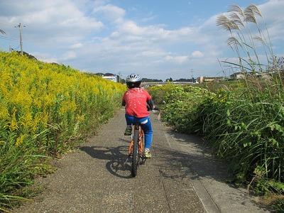 新川沿いのサイクリングロード